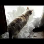 Un chat avec de la blanche