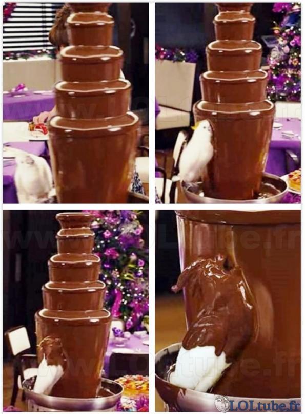 Chocolaaaaaaaaaaat