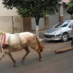 Du surf à cheval