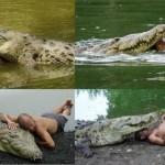Mon ami le crocodile