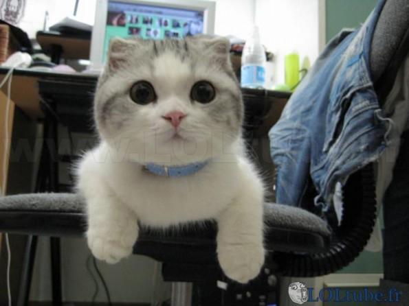 Qu'est ce que tu regardes ?