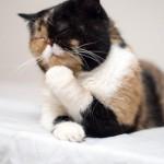 Un chat penseur