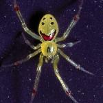 Une araignée contente