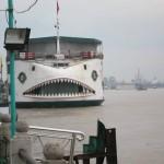 Bateau requin