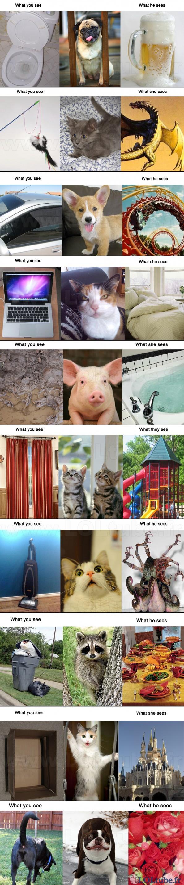 Comment les animaux voient les choses