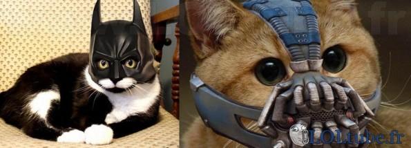 Cosplay batman pour chat