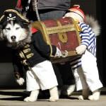 Costume de pirate pour chien