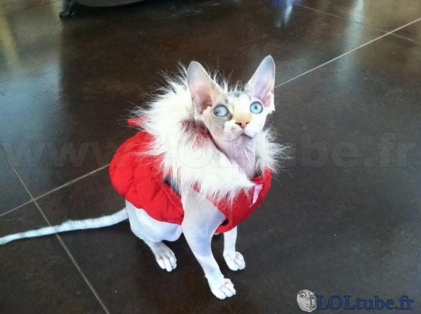 Derp le chat moche