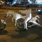 Elvis sur son cheval