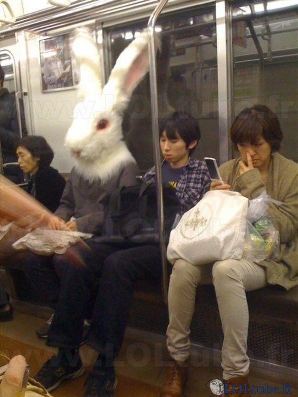 Lapin dans le tram