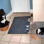 Le chat a volé la place du chien