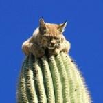 Un cactus, parfait pour dormir