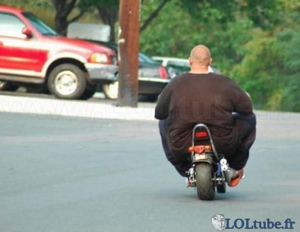 Un éléphant sur une mini moto