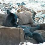 Un ours se gratte la nouille sur son canapé
