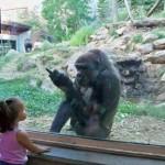 Un singe pas content