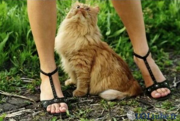 Une chatte regarde une chatte