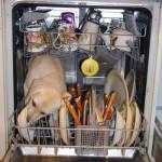 Chien squateur de lave vaisselle