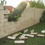 Chute de cactus