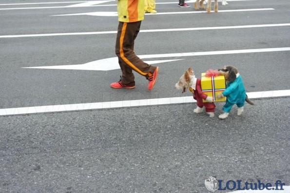 Costume de chien marrant