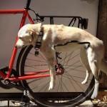 Promener son chien sur le vélo