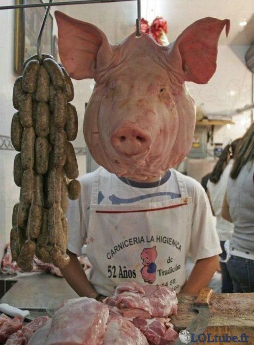 Quelle tête de cochon celui-là !
