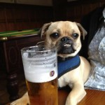 Une pinte pour le chien de la 2