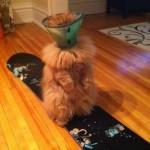 Ce chat a un problème
