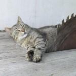 Chat qui vit dangereusement