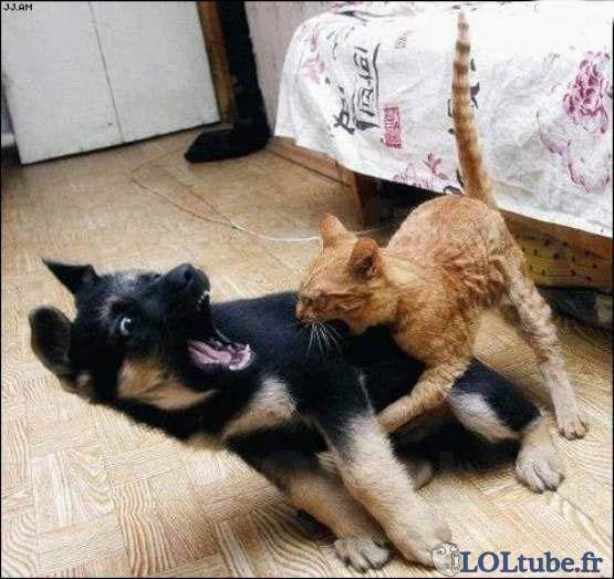 Chat violent