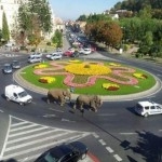 Cortège d'éléphants