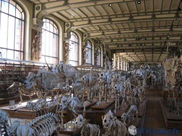 Des os et des os