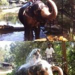 Elephant arroseur
