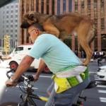 Faire du vélo avec un chien