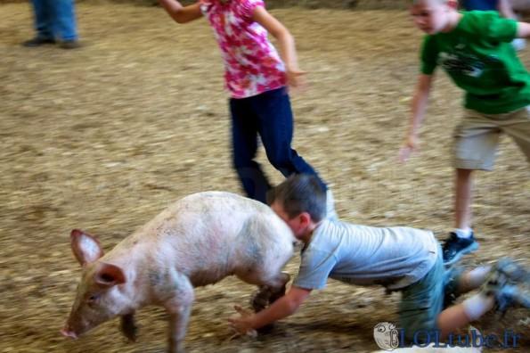 Tomber sur un cochon