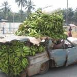 Transport de bananes