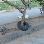 Un arbre a poussé dans un pneu
