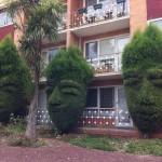 Arbustes visagés