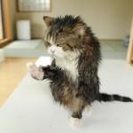 Chat qui tire la gueule