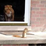 Chien et chat unis contre un adversaire commun