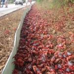 Evitons les crèpes de crabe