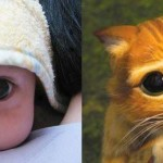 Le chat potté en bébé