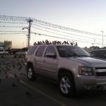 Invasion sur le parking