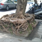 Problème de racines ?