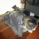 Un chat en armure