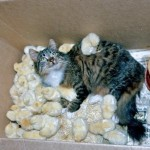 Une chatte et ses chatons