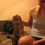 Ce chat sait ce qu'il veut