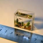 Aquarium miniature