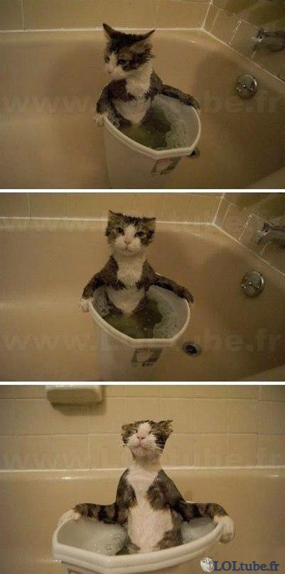 Blog de madri2 : Images dr�les � gogo, Chat qui aime �tre d�tendu dans son bain