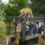 De la viande en cage
