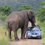 Imposant éléphant
